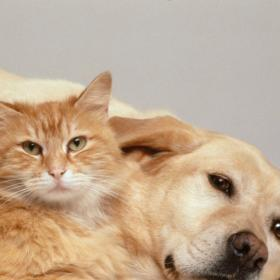 People,pet parenting,Pets and Health