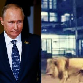 World,Coronavirus Crisis,Fake news,Vladimir Putin