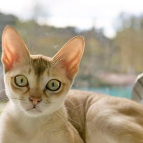 People,pet parenting,High Rise Syndrome in Cats
